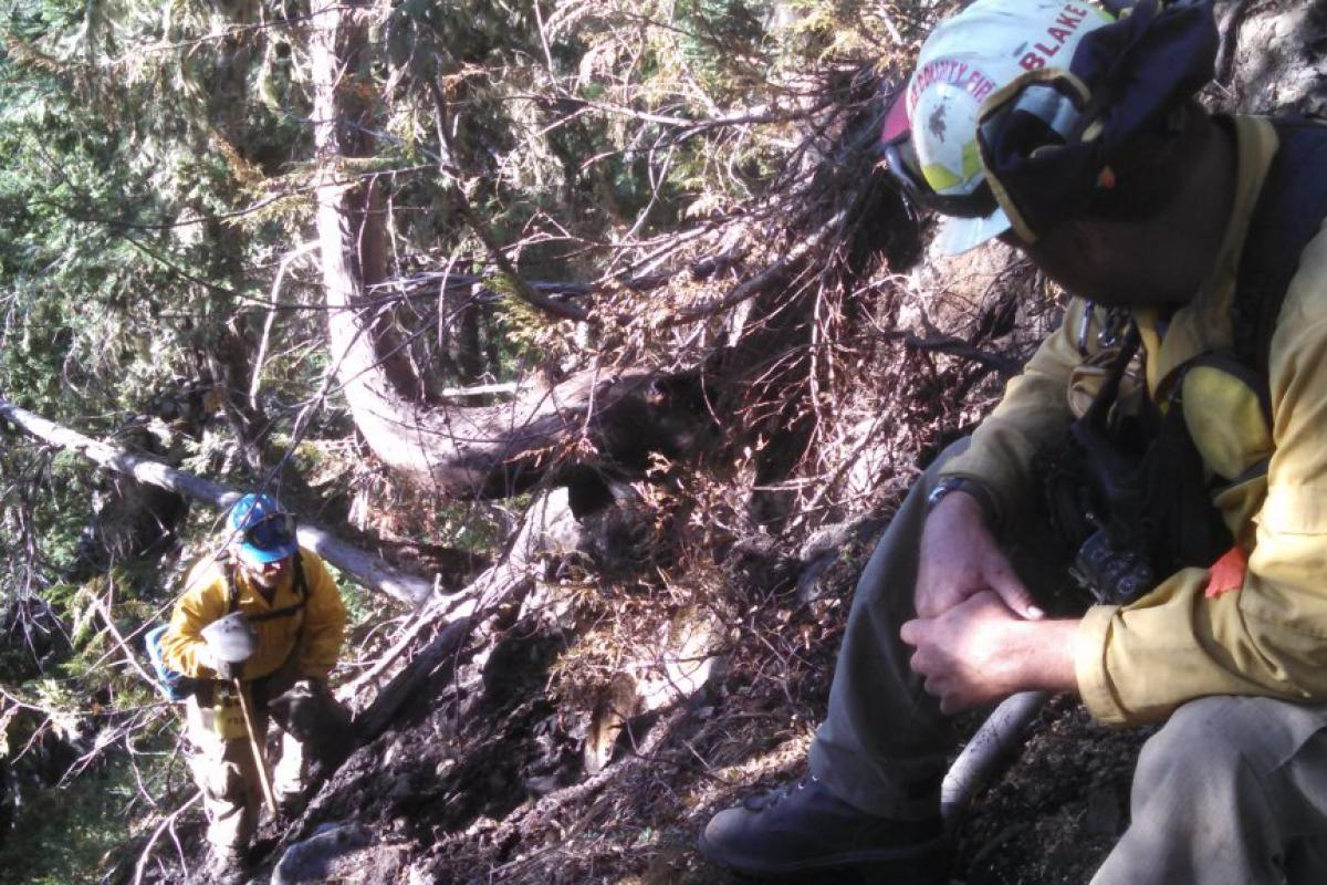 Firefighters on hill with tree